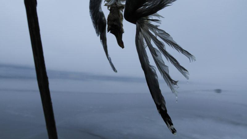Bilde av død fugl