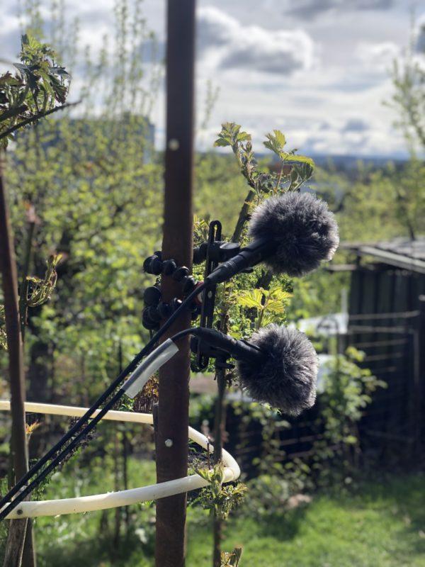 Podkastopptak av fuglekvitter