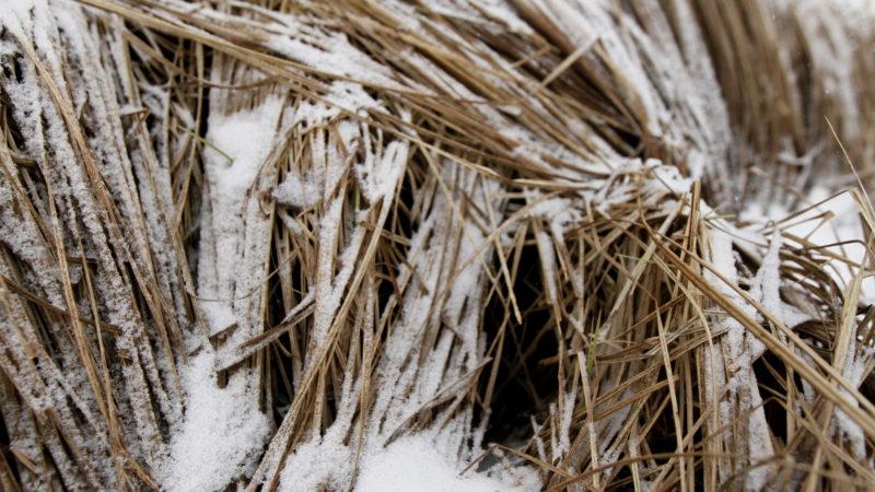 Høy dekket av snø